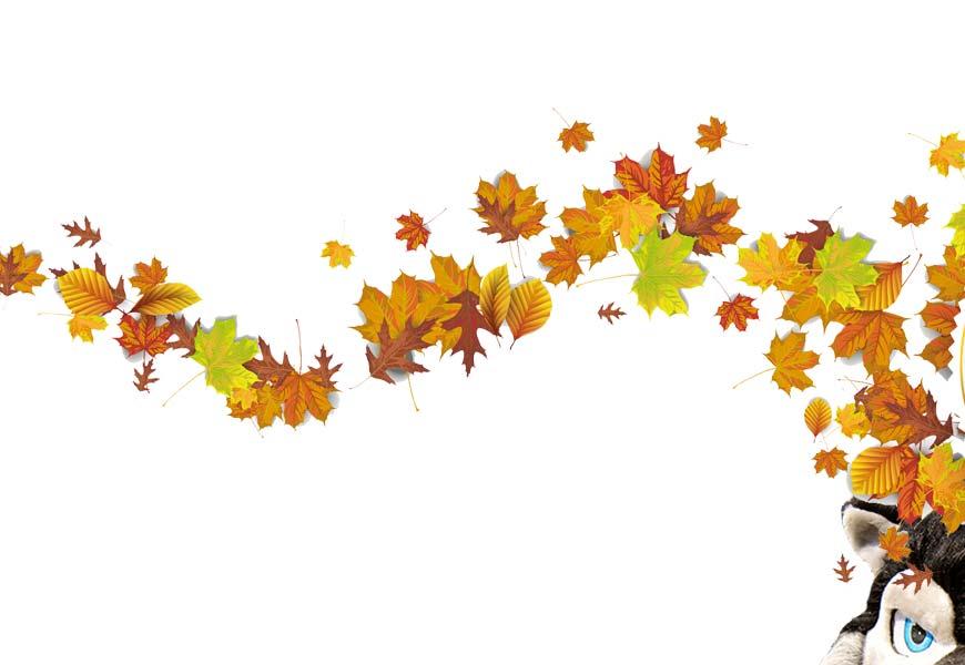 Slide Herbstfest